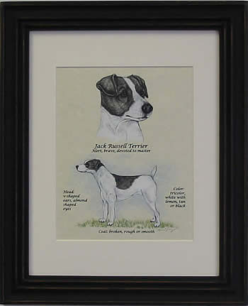 Clapper Hollow Jack Russell